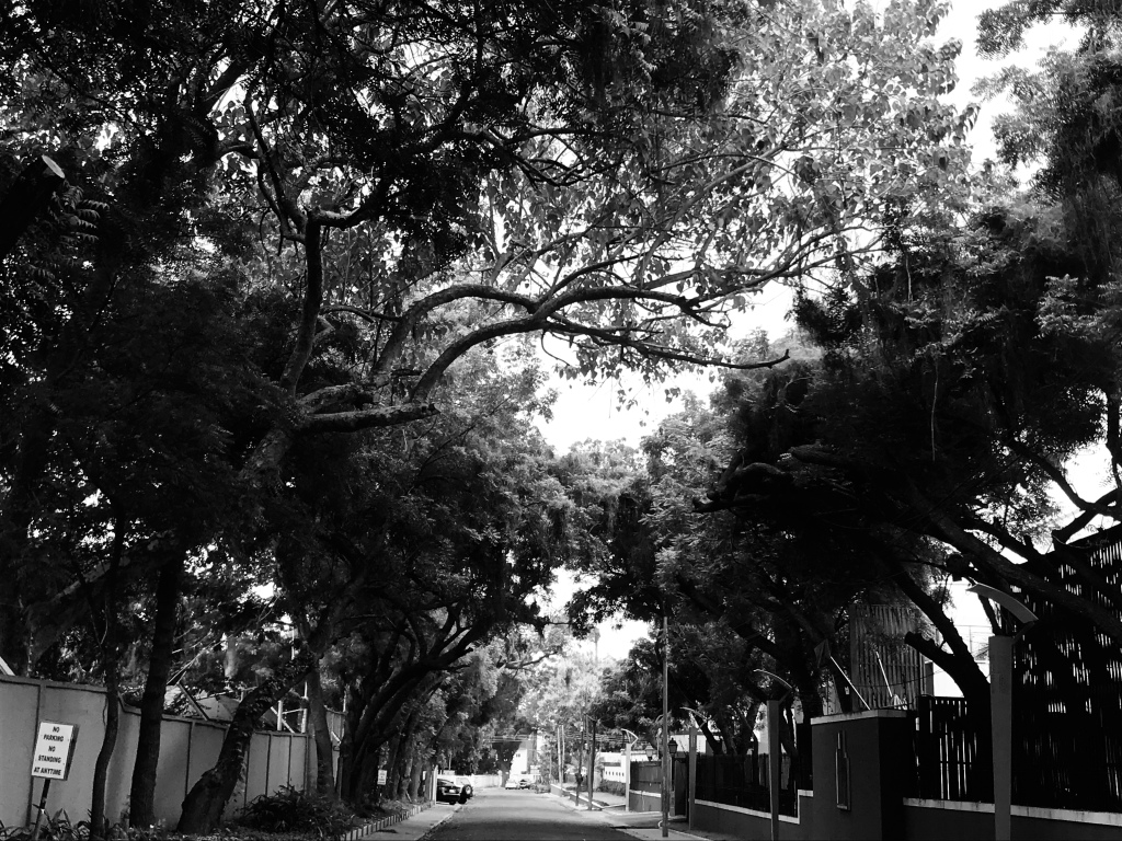 Street in Accra with beautiful trees