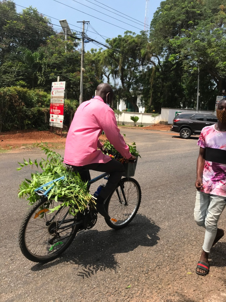 A man riding a bike with plants tied to the bike and stuffed into the basket in Osu Accra